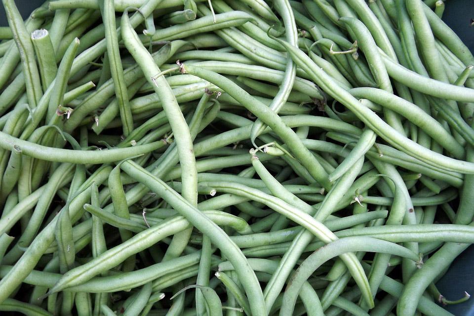 Gratinierte grüne Bohnen auf Dinkelgrieß